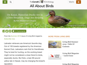 All About Birds – On Kauai, Hawaiian Ducks Are in a Dire Situation. Dogs Are Helping
