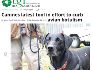 The Garden Island – Canines latest tool in effort to curb avian botulism